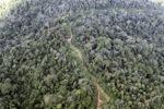Logging road -- sabah_1507