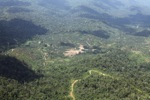 Oil palm plantation -- sabah_1515