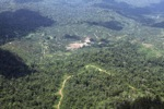Oil palm plantation -- sabah_1517