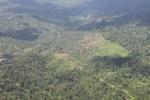 Oil palm plantation -- sabah_1518