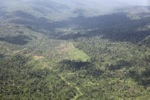 Oil palm plantation -- sabah_1520