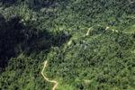 Logging road -- sabah_1523