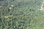 Logging road -- sabah_1524