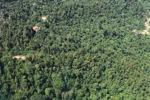 Logging road -- sabah_1525
