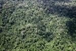 Logging road -- sabah_1528