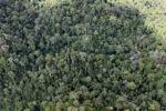 Logging road -- sabah_1532