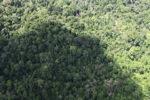 Logging road -- sabah_1533