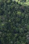 Logging road -- sabah_1534