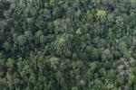 Logging road -- sabah_1536