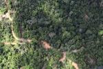 Logging road -- sabah_1539