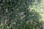 Borneo rainforest -- sabah_1540
