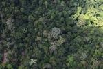 Borneo rainforest -- sabah_1541