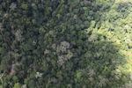 Borneo rainforest -- sabah_1542