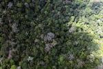 Borneo rainforest -- sabah_1543