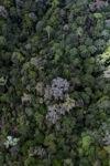 Borneo rainforest -- sabah_1544