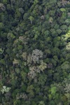 Borneo rainforest -- sabah_1545