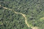 Logging road -- sabah_1548