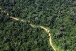 Logging road -- sabah_1550