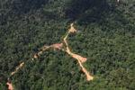 Logging road -- sabah_1553