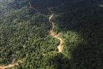 Logging road -- sabah_1556