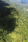 Logging road -- sabah_1558