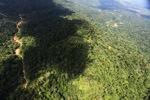 Logging road -- sabah_1559