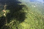 Logging road -- sabah_1560