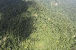 Logging road -- sabah_1561