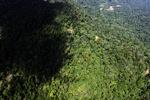 Borneo rainforest -- sabah_1562