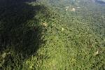 Borneo rainforest -- sabah_1563