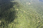 Borneo rainforest -- sabah_1564