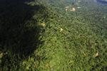 Borneo rainforest -- sabah_1565