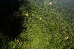Borneo rainforest -- sabah_1566