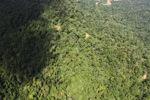 Borneo rainforest -- sabah_1567