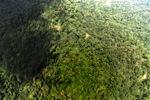Borneo rainforest -- sabah_1568