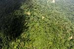 Borneo rainforest -- sabah_1569