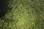 Borneo rainforest -- sabah_1570