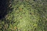 Borneo rainforest -- sabah_1571