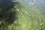 Borneo rainforest -- sabah_1572