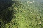 Borneo rainforest -- sabah_1573