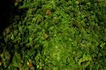 Borneo rainforest -- sabah_1574
