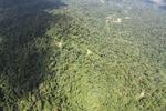 Borneo rainforest -- sabah_1575