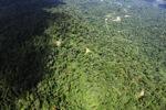 Borneo rainforest -- sabah_1576