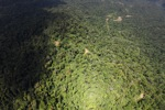 Borneo rainforest -- sabah_1577