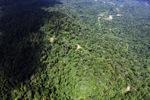 Borneo rainforest -- sabah_1578