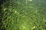 Borneo rainforest -- sabah_1579