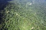 Borneo rainforest -- sabah_1580