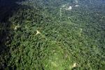 Borneo rainforest -- sabah_1581