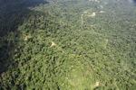 Borneo rainforest -- sabah_1582