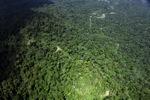 Borneo rainforest -- sabah_1583
